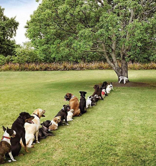 save-trees-for-dogs